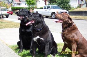 Bixby, Elliott, Gumbo