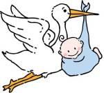 Or stork?