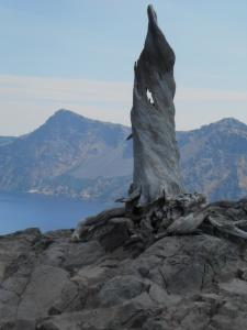 Crater Lake stump
